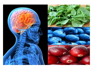 Food and the Brain: Antioxidants