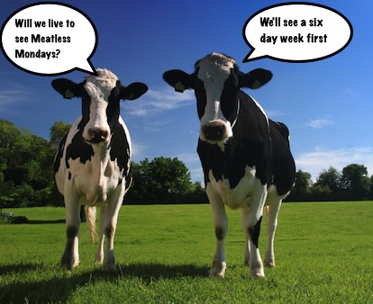 grazing cows discuss meatless mondays