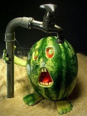 Watermelon Needs Water