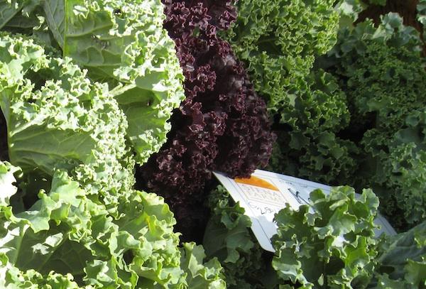 Farmer's Market Kale