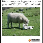 A Sheepish Ingredient in Milk