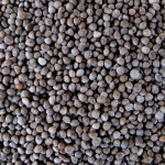 New Superfood? Perilla Seeds Make Chia Look Puny In Comparison