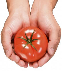 Tomato Products – Preserved and Precious