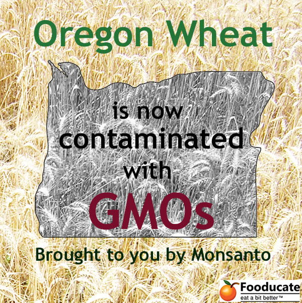Three Concerns Rising From Oregon's GMO Wheat