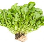 The Top 41 Powerhouse Fruits and Vegetables by Nutrient Density. Kale is only #15