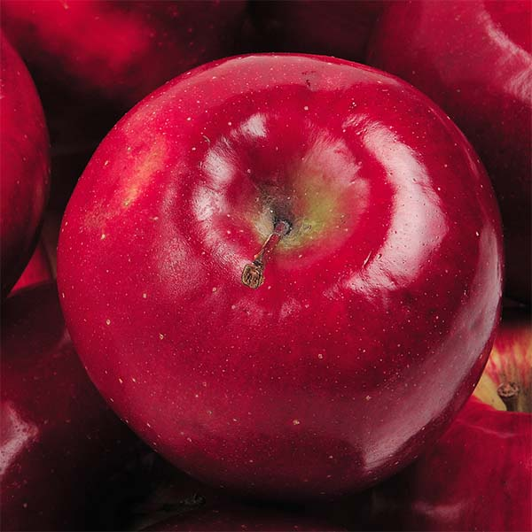 This Apple Exemplifies Where America's Food System Went Wrong