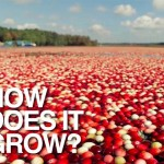 6 Cranberry Facts You Did Not Know [Video, Recipe]