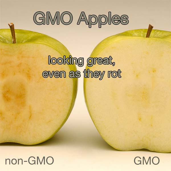 USDA Rubber Stamps Approval for GMO Apples