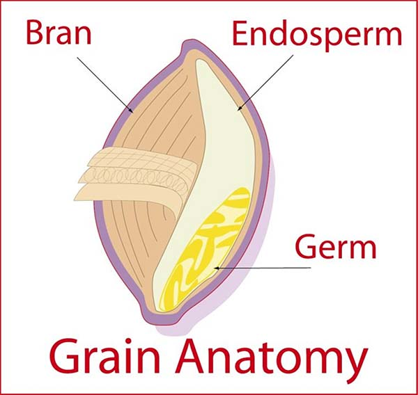 The Difference Between Whole Grains & Whole Wheat [Bread miniseries part 2/4]