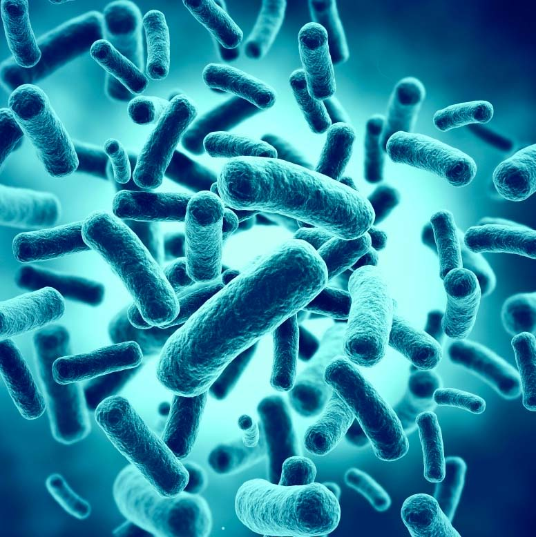 Antibiotics, Gut Bacteria and Diabetes Risk