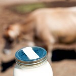 Raw Milk - The Pros and Cons