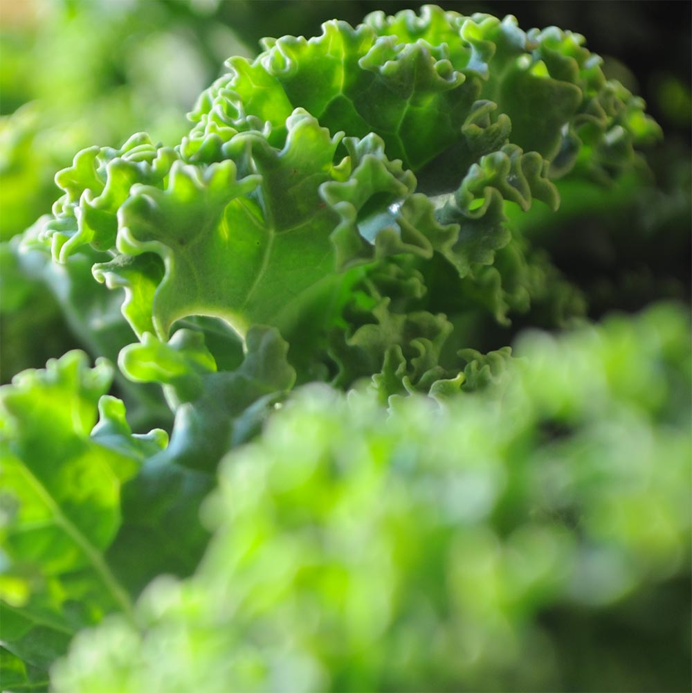 3 Simple Steps to Kale Heaven