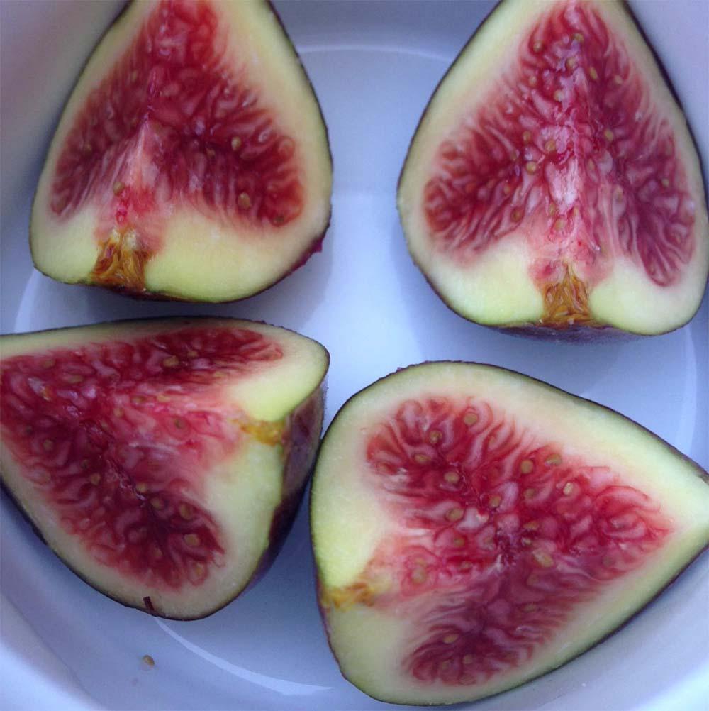 Fresh Figs FTW!