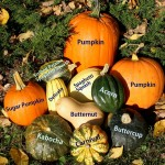 The Many Virtues of Winter Squash