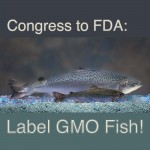 Congress to FDA: GMO Salmon Should Be Labeled
