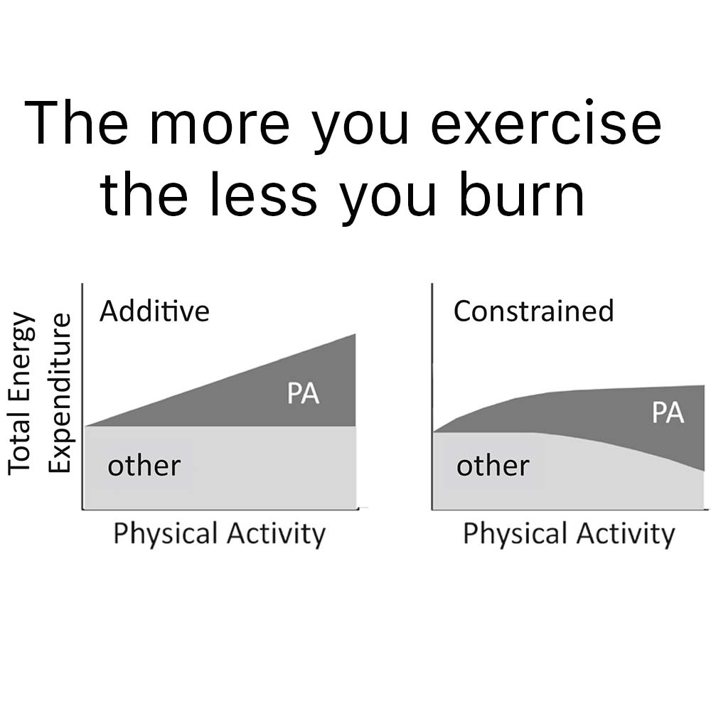 Exercise and Energy Burn models