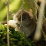 Oops, the Paleo Diet Leads to Weight Gain (In Mice)