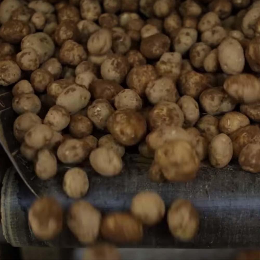 Praise for Potatoes