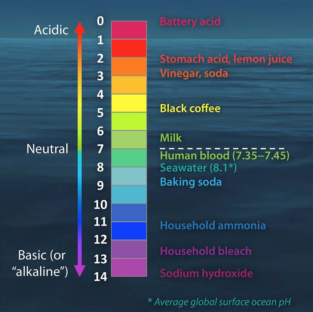 Is There Any Benefit in an Alkaline Diet?