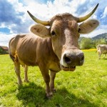 Dairy Allergy vs. Dairy Intolerance - What You Need to Know